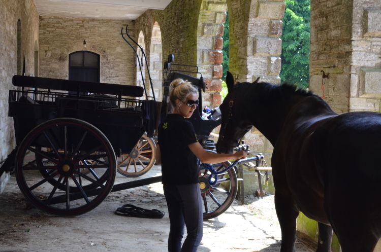 Horse_and_Carriage